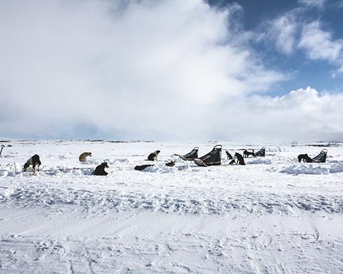 Snowy scene with husky dogs
