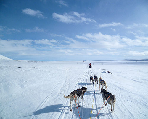 Dog sledding in the arctic