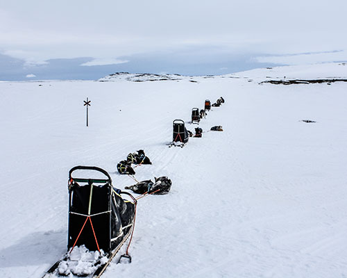 Husky dogs and sleds stopped on a snowy trail
