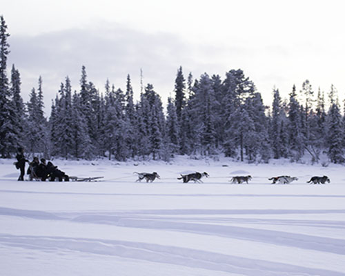 people on a dog sled in the arctic